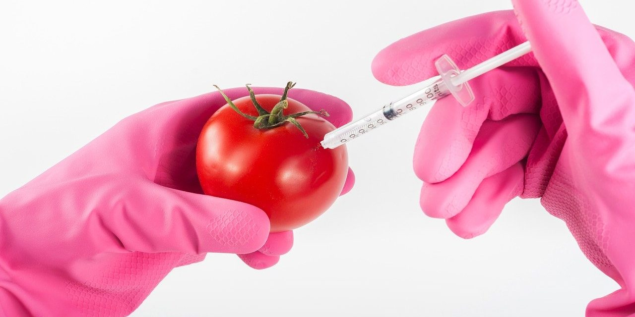 Wady i zalety upraw GMO